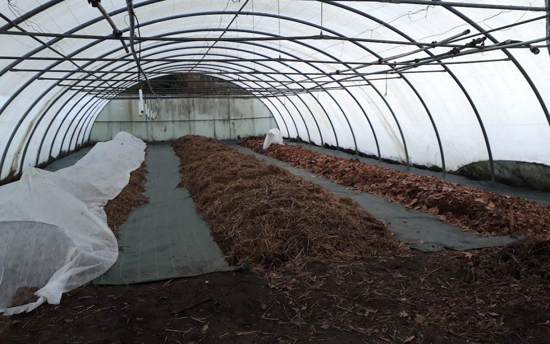 La permaculture dans un tunnel