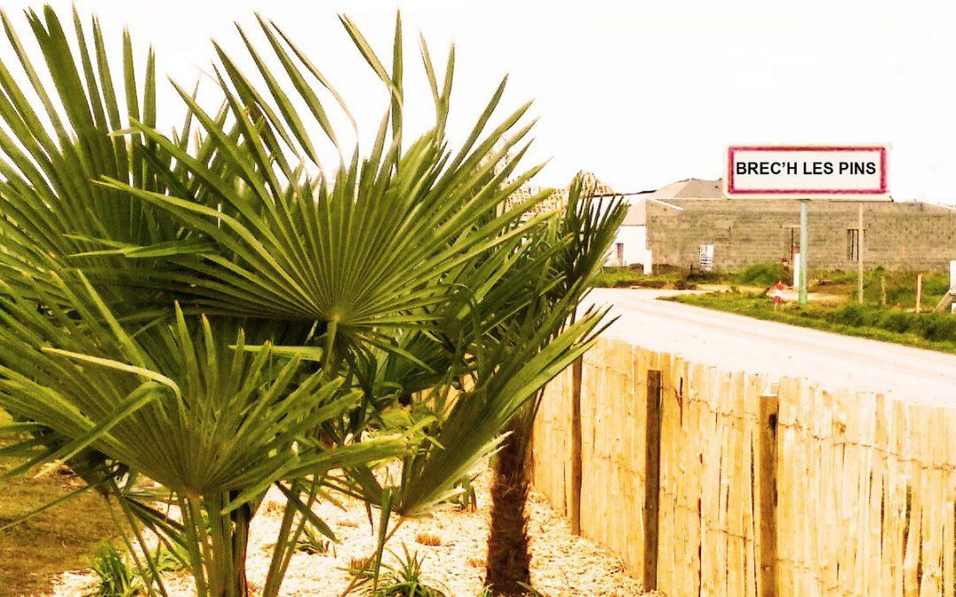 Savez-vous planter les graminées et les palmiers ?  A la mode, à la mode ….