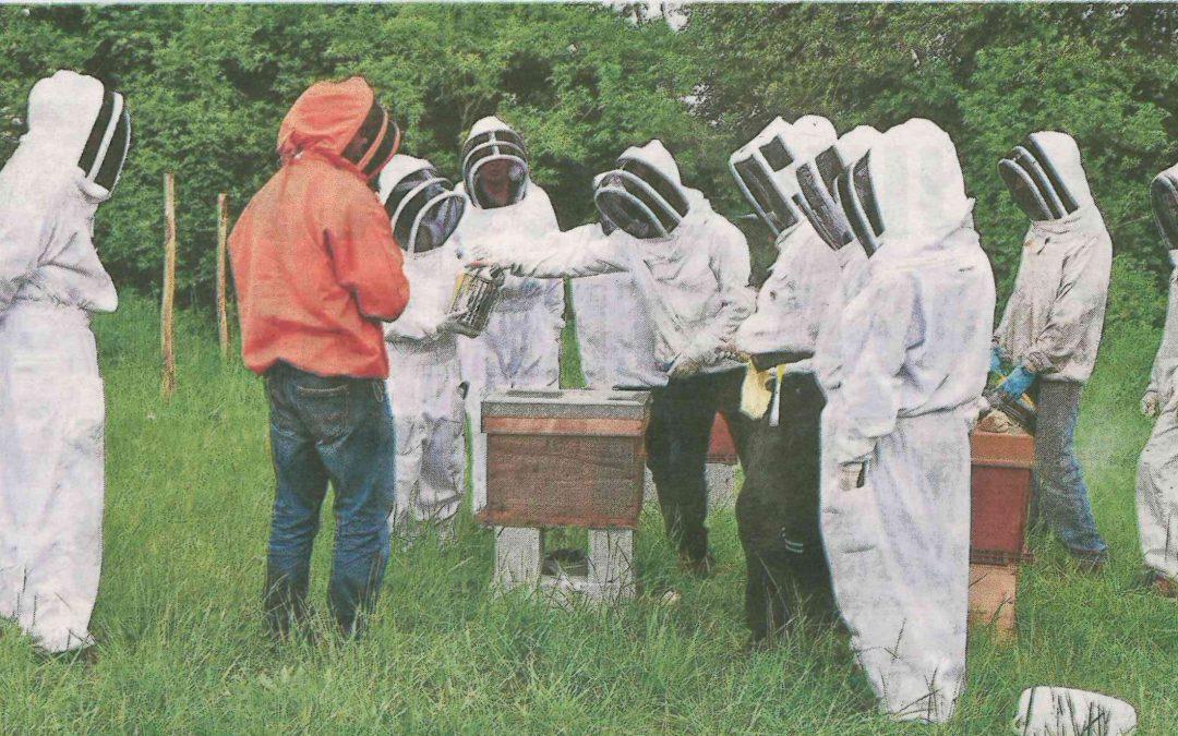 Apiculture. Kerplouz s'ouvre aux abeilles