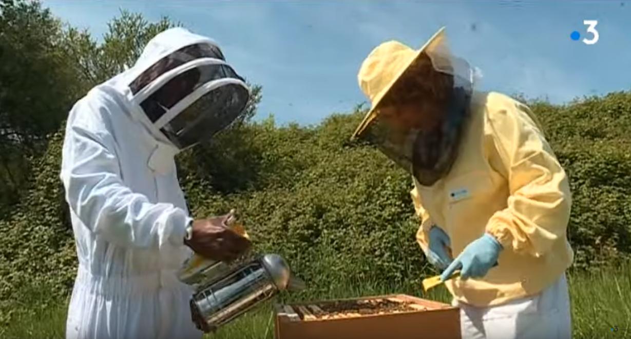 Apiculteurs : une formation certifiée à Auray pour tout savoir sur les abeilles (France 3)