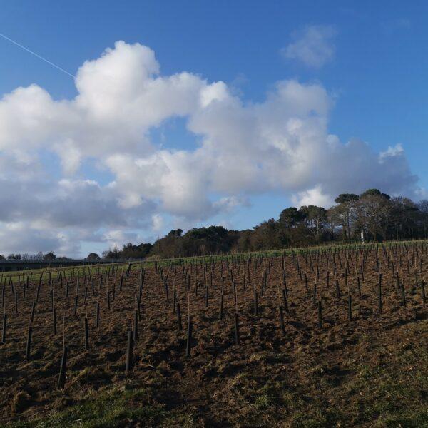 La première vigne pédagogique au Lycée Kerplouz LaSalle